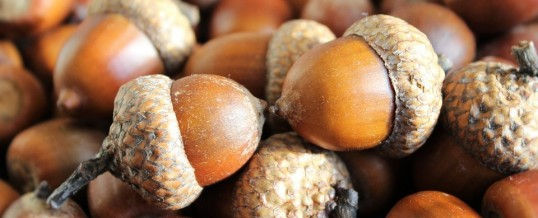 In with a stone – out with an acorn